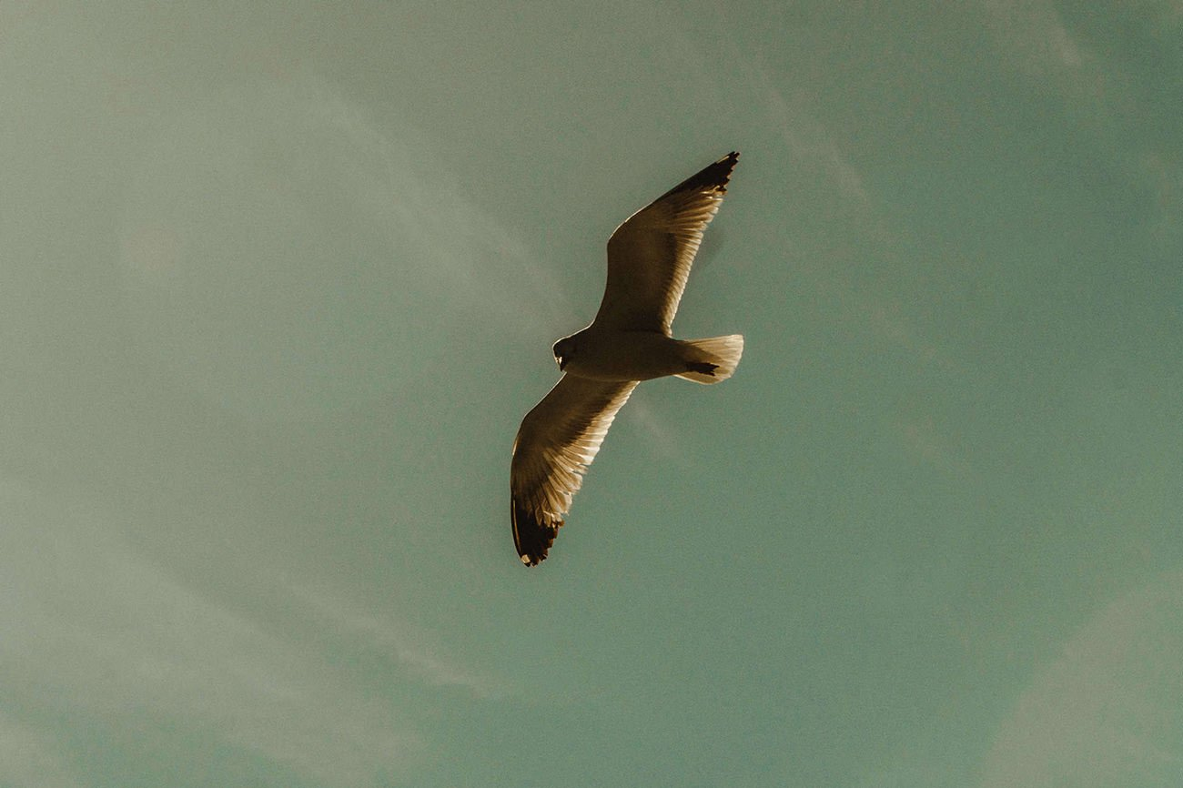 Seagull close up in Paxos