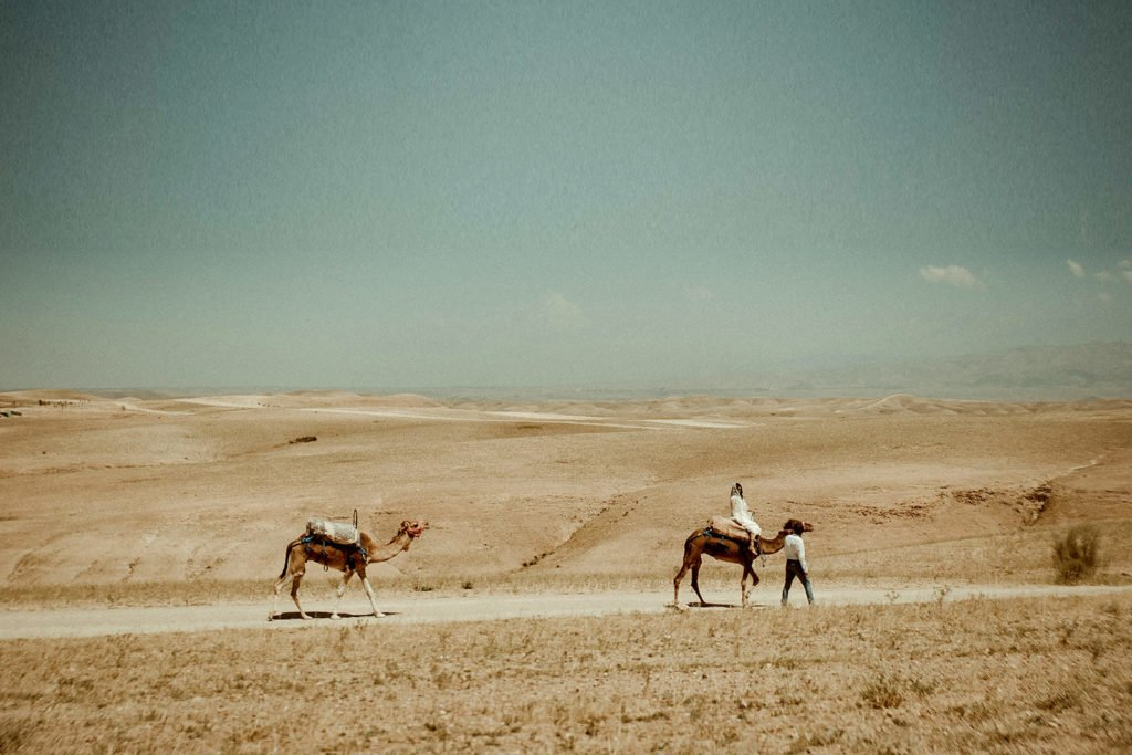 Morocco Wedding Videographer filming Marrakech Elopement in the desert with camels